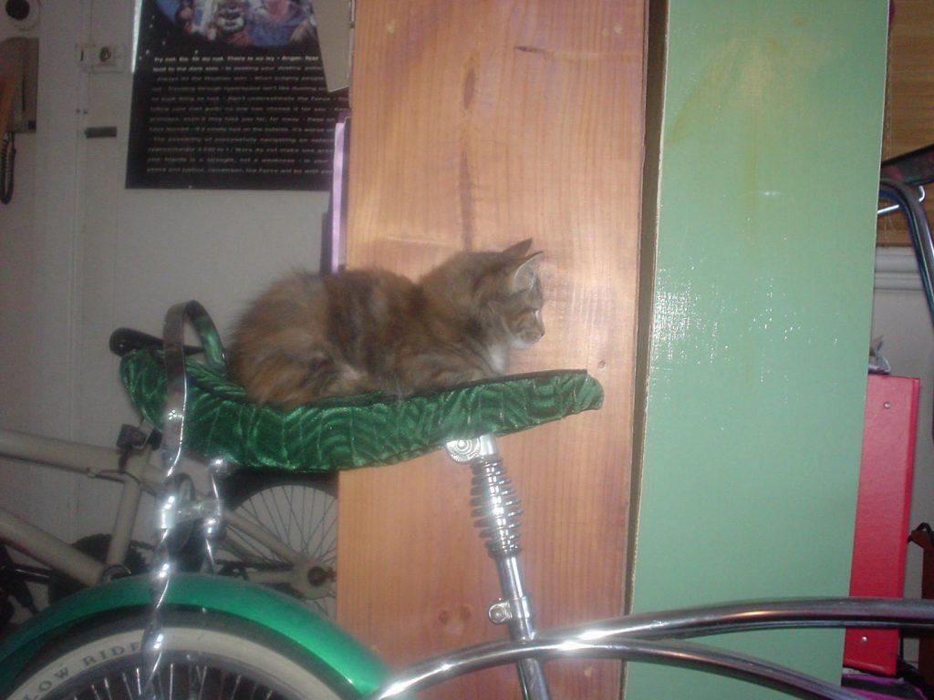 mini on bike